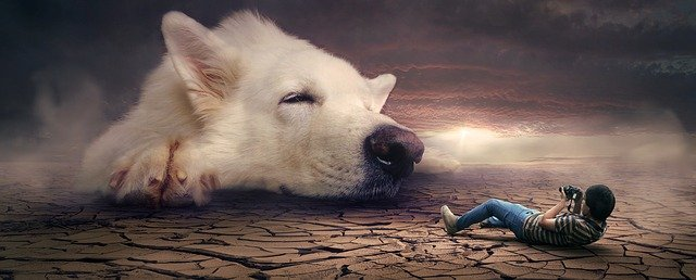 As melhores profissões para quem ama cães